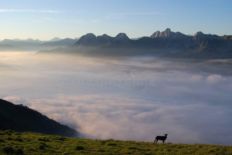 море облаков alps стоковое фото