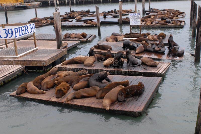 море пристани 39 львов стоковая фотография