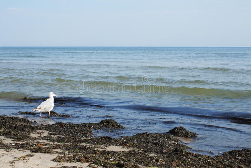 море птицы пляжа пакостное стоковое фото rf