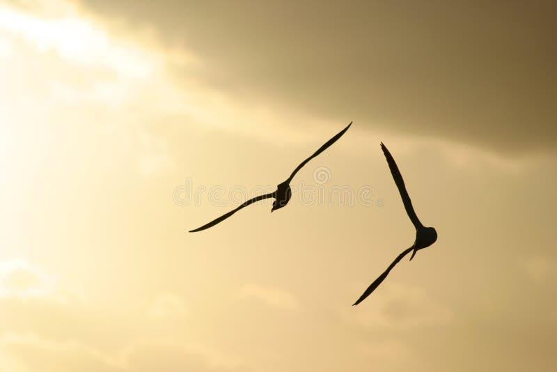 море птиц стоковая фотография