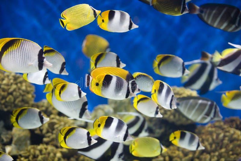 море рыб стоковое изображение rf