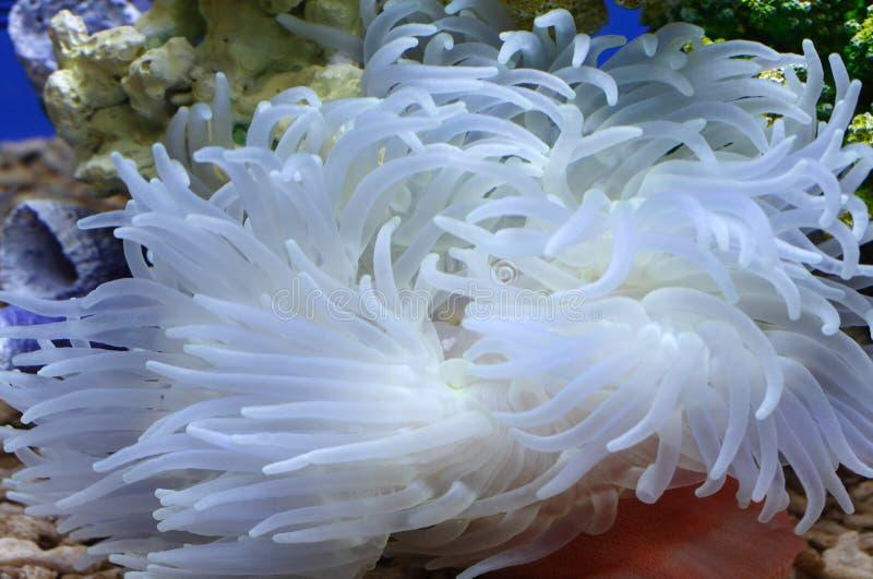 Download море сада вниз стоковое фото. изображение насчитывающей малокровная - 6867492