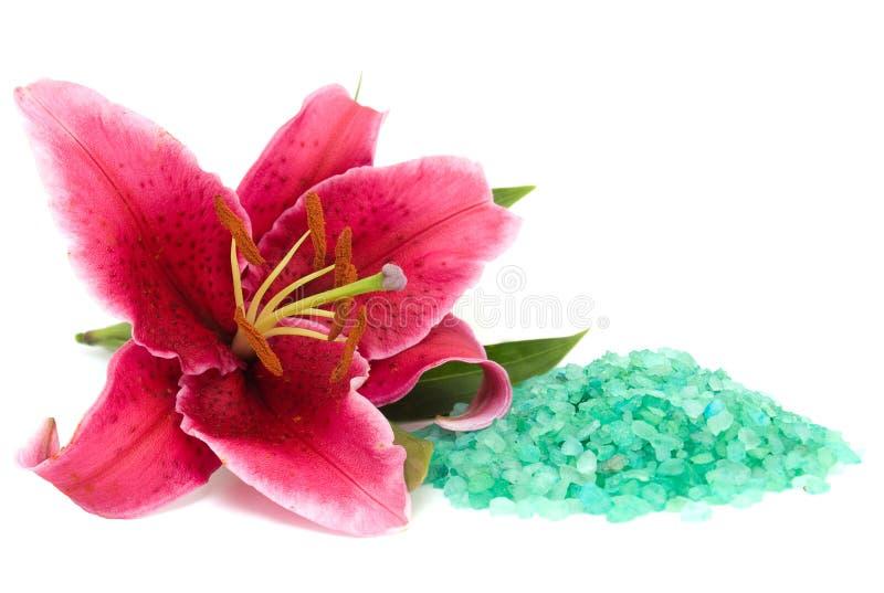 море соли лилии розовое стоковая фотография