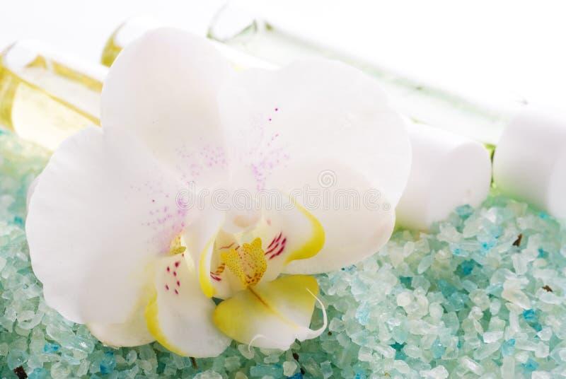 море соли орхидеи стоковая фотография