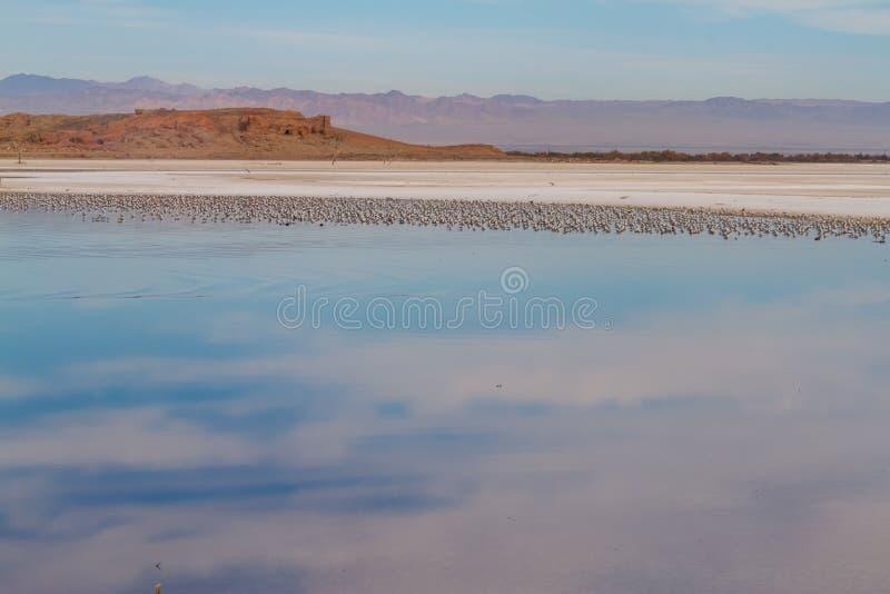 Море Солтон стоковое изображение