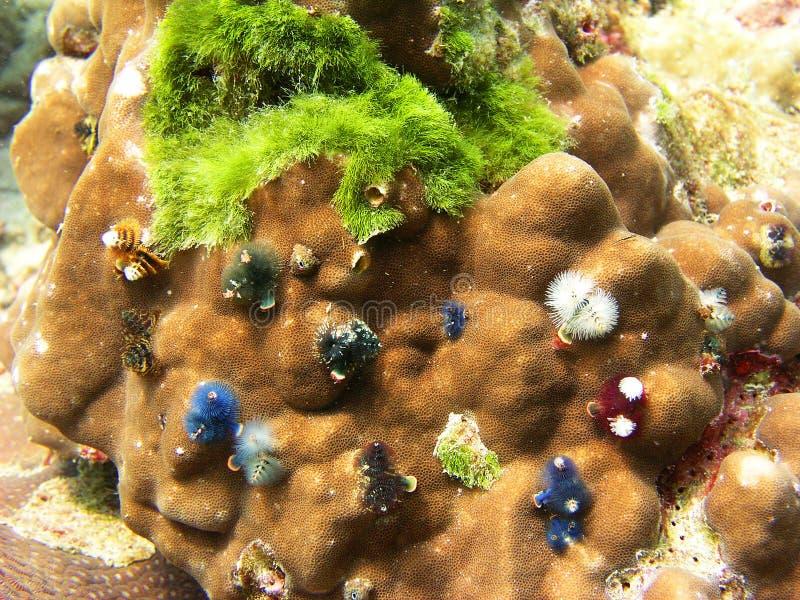 море Таиланд рифа жизни коралла стоковая фотография