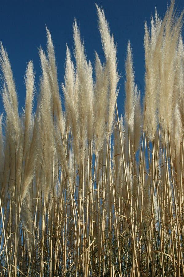 Download море травы стоковое изображение. изображение насчитывающей флора - 89709