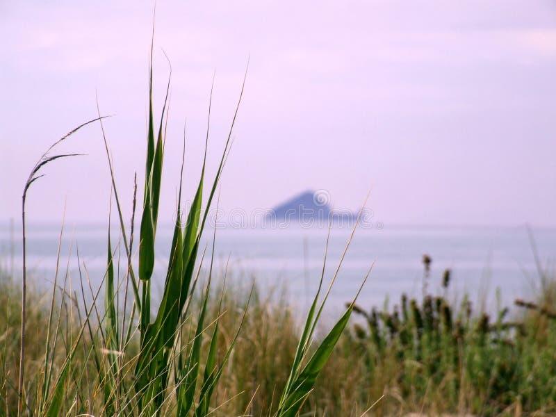 море трав стоковая фотография