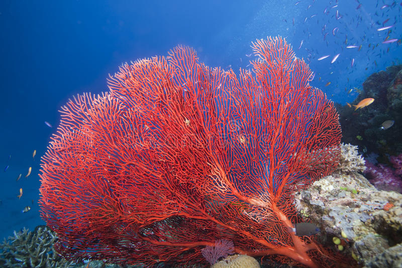 море Фиджи вентилятора