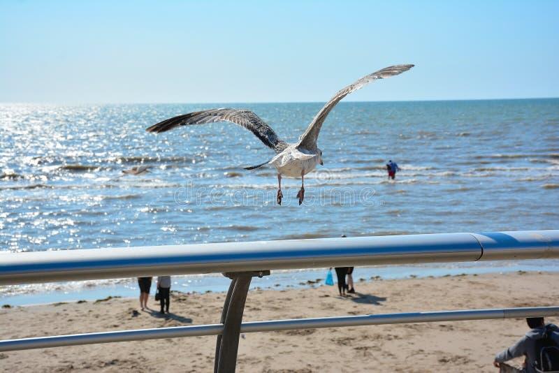 Море чайки летания на заднем плане блестящее стоковые изображения