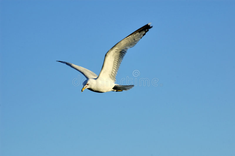 море чайки стоковое фото rf