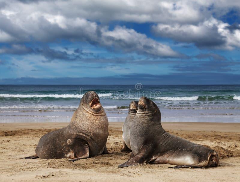 море львов одичалое стоковое фото rf