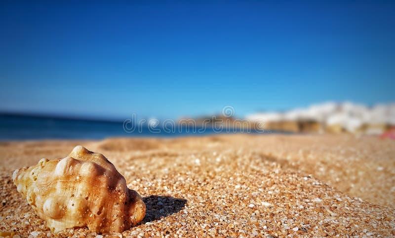 Море Albufeira стоковое фото rf