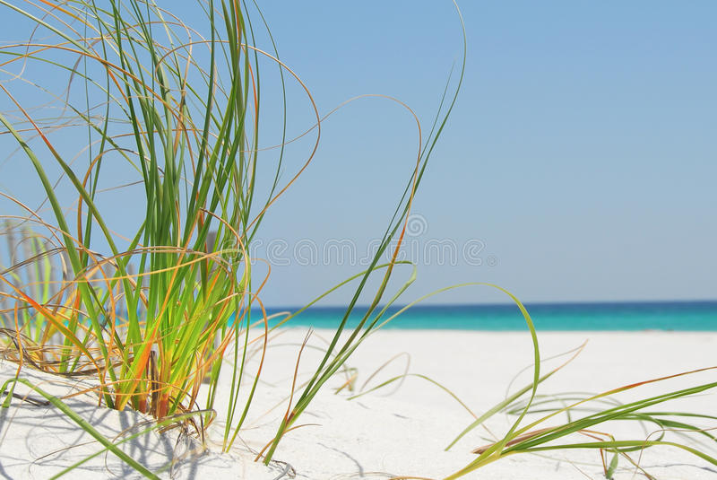 море pensacola травы пляжа стоковая фотография rf