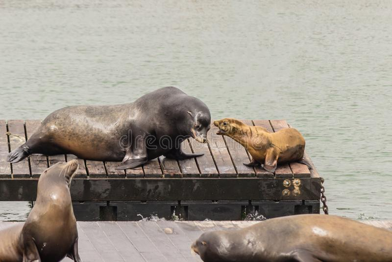 море san львов francisco стоковые фото