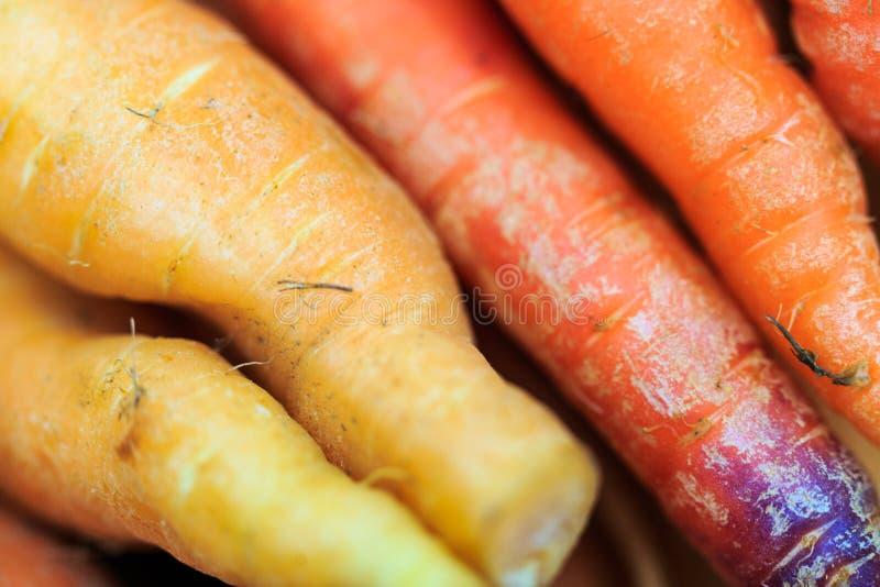 Моркови апельсин, желтый цвет, фиолетовый на дисплее на рынке в естественном свете стоковые изображения rf