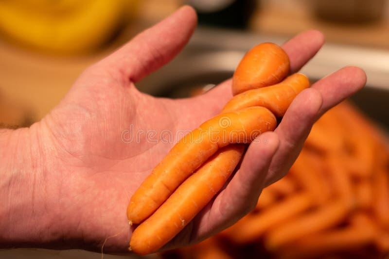Моркови в влюбленности стоковое фото rf