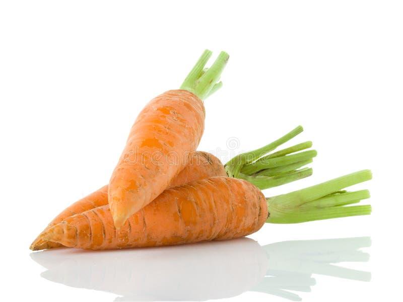 моркови изолировали белизну стоковые фото