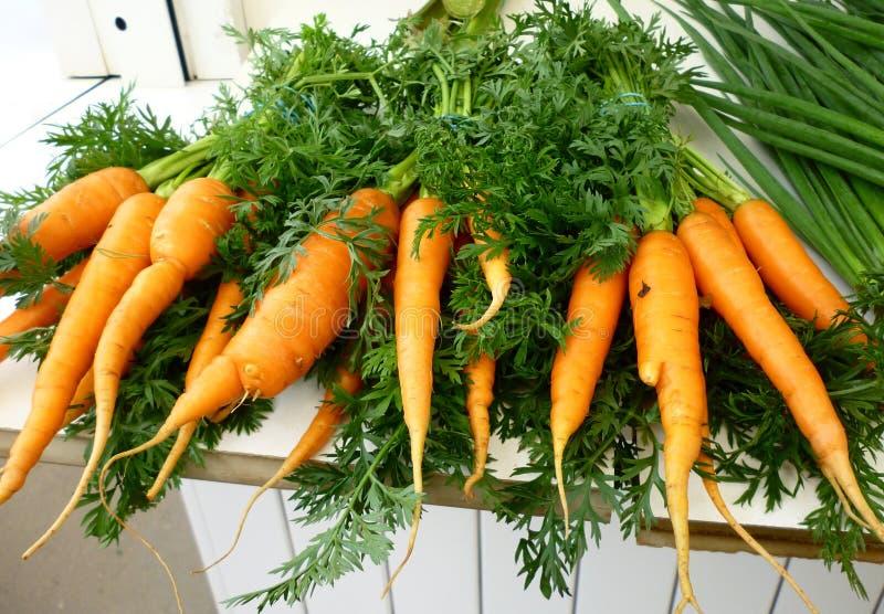 моркови молодые стоковое изображение