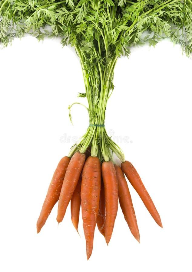 моркови предпосылки белые стоковое фото rf