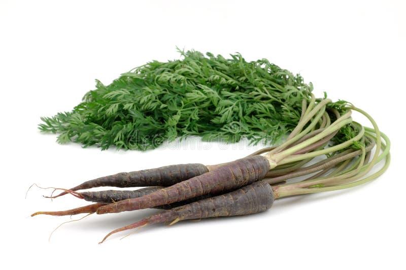 моркови пука пурпуровые стоковое фото