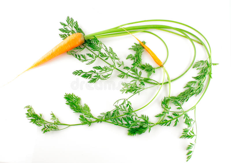 моркови свежие стоковое изображение rf