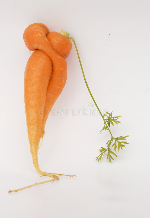 морковь в реальном маштабе времени стоковое изображение