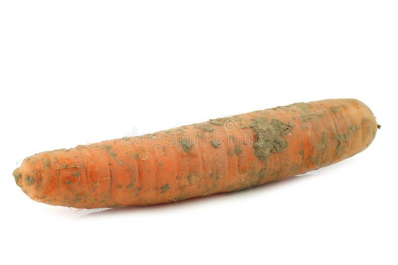 Морковь зимы стоковая фотография