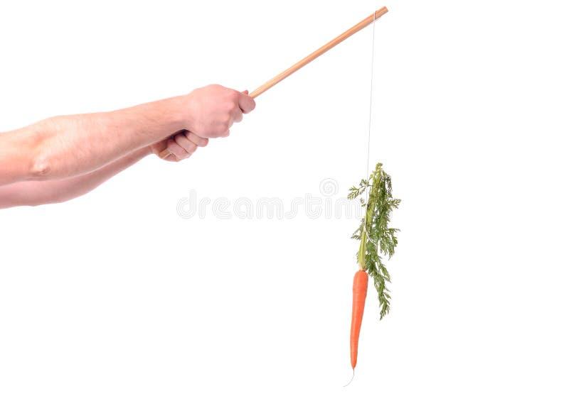 Морковь мотивировки стоковое фото rf