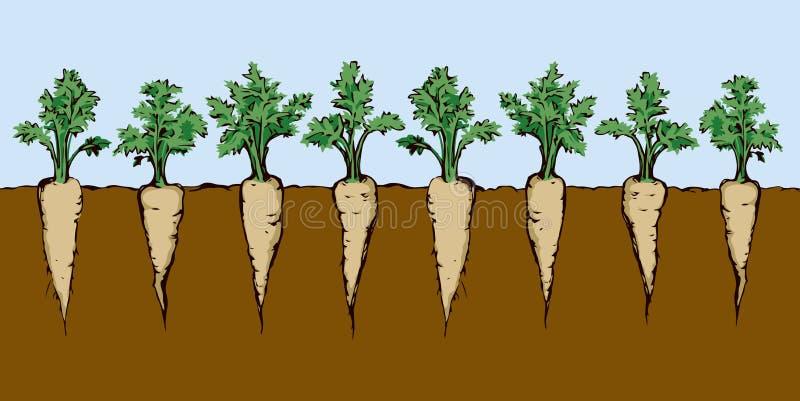морковь предпосылка рисуя флористический вектор травы иллюстрация вектора