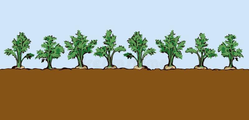 морковь предпосылка рисуя флористический вектор травы иллюстрация штока