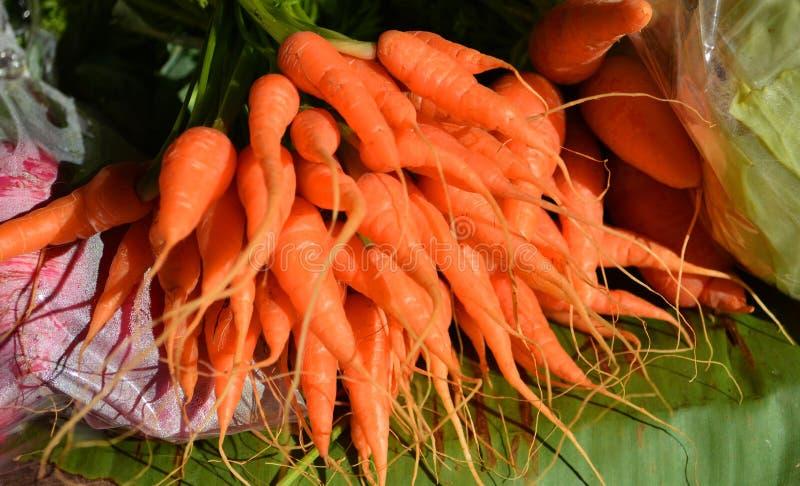 морковь приманки малая стоковая фотография rf