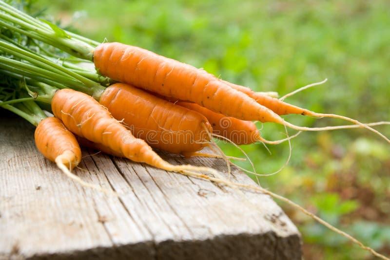 морковь свежая стоковое изображение rf