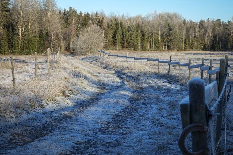 Морозная дорога леса холодный солнечный красивый день стоковые изображения