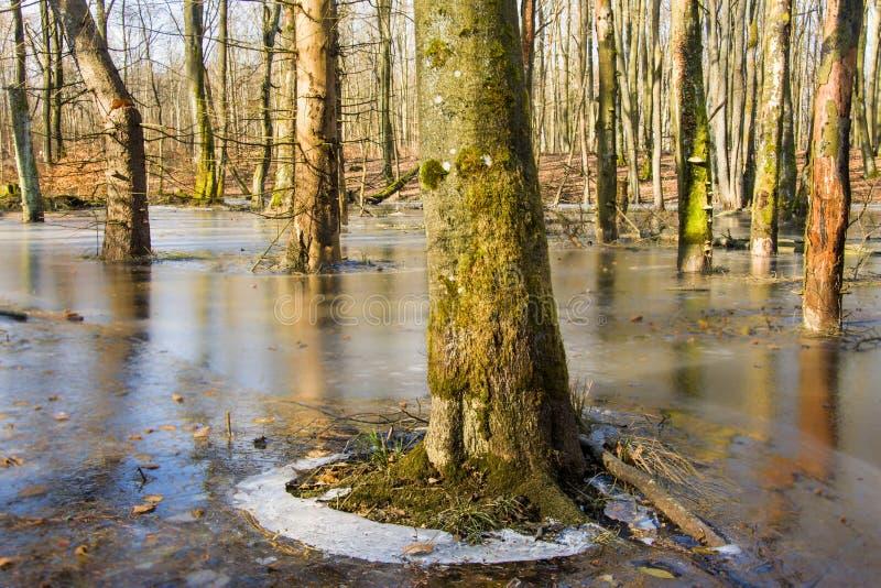 Морозная осень в лесе стоковые изображения