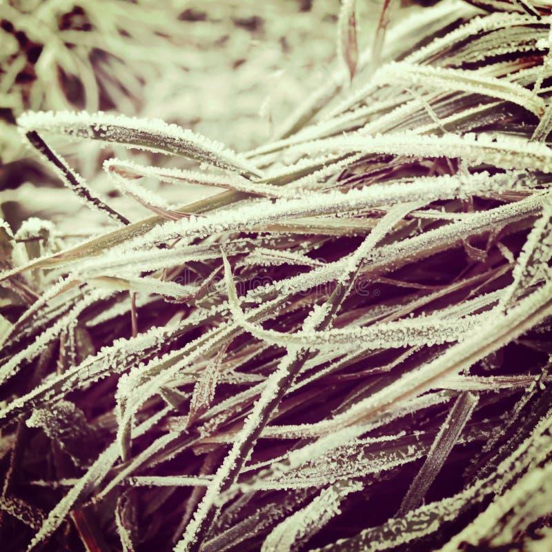 Морозная предпосылка травы зимы стоковая фотография