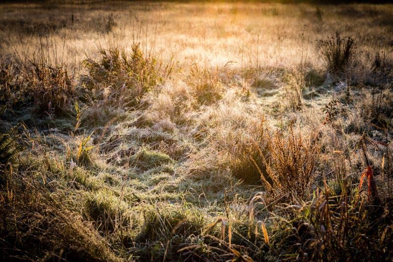 Морозная трава в восходе солнца раннего утра над сухим полем травы стоковые фотографии rf