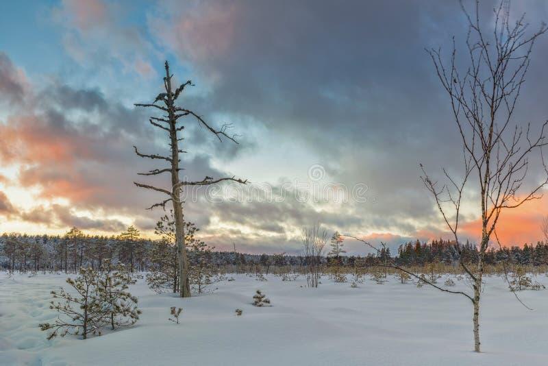Морозное утро в поднятой трясине Ландшафт с замороженными заводами latvia стоковое изображение