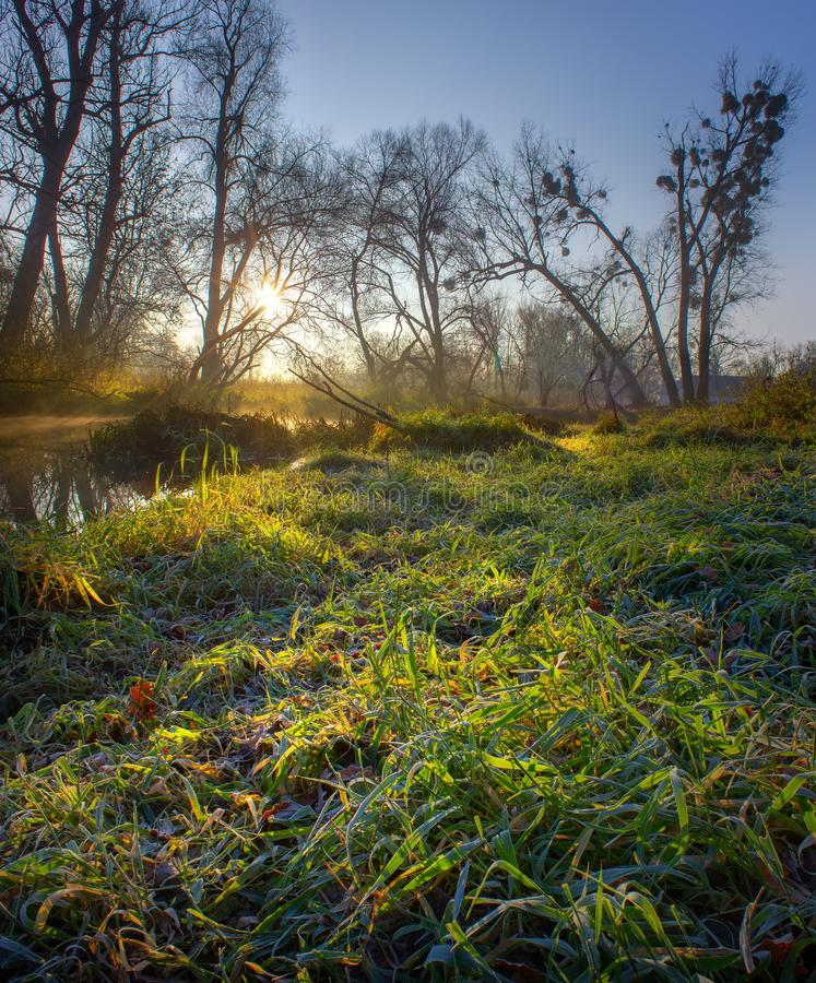 Морозное утро на реке стоковая фотография
