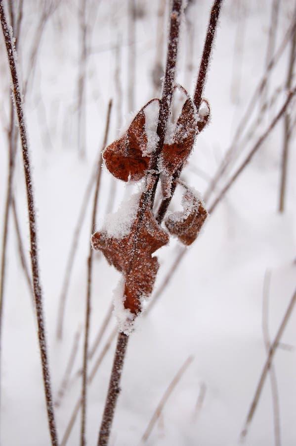 Download морозные листья стоковое фото. изображение насчитывающей завод - 41656916