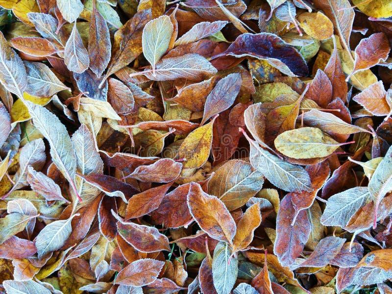 морозные листья стоковые изображения rf