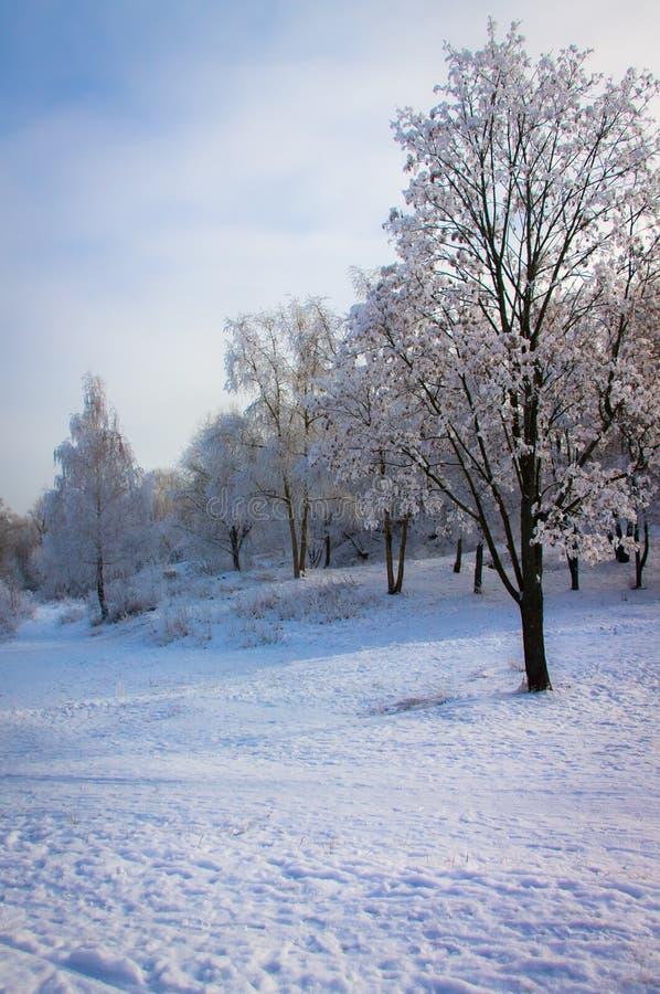 Морозный зимний день в парке стоковая фотография rf