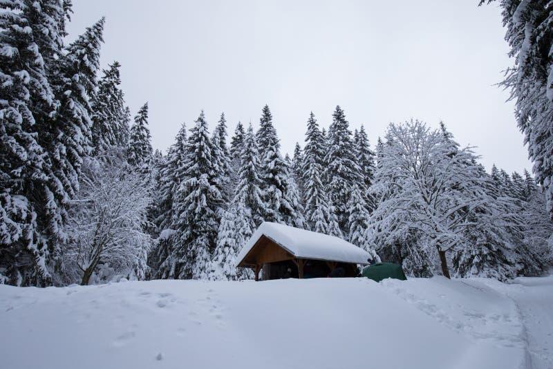 Морозный пасмурный день в деревьях Snowy леса горы елевых в пурге Кинематографическая съемка интенсивной вьюги Рождество стоковое изображение rf