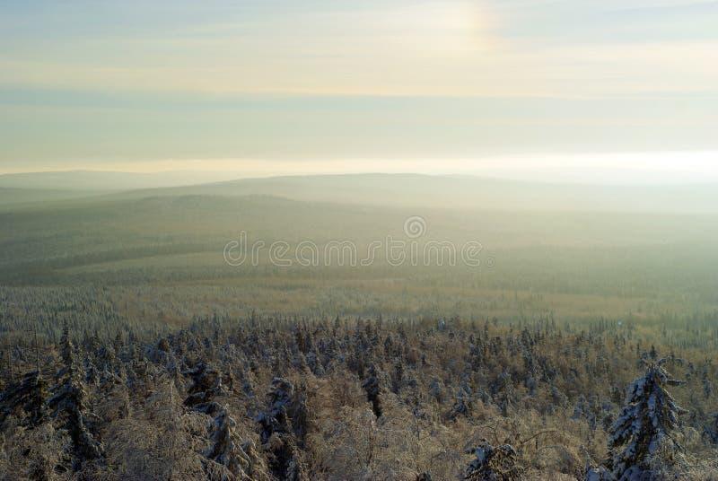 Морозный помох и солнечный венчик над лесом стоковое изображение rf
