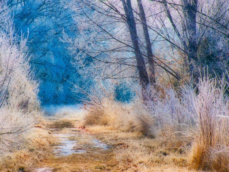 Морозный путь рано утром стоковая фотография rf