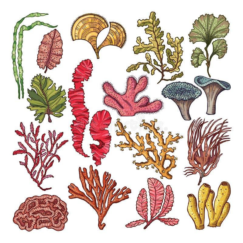 Морская водоросль и кораллы Подводные естественные изолированные заводы иллюстрация штока