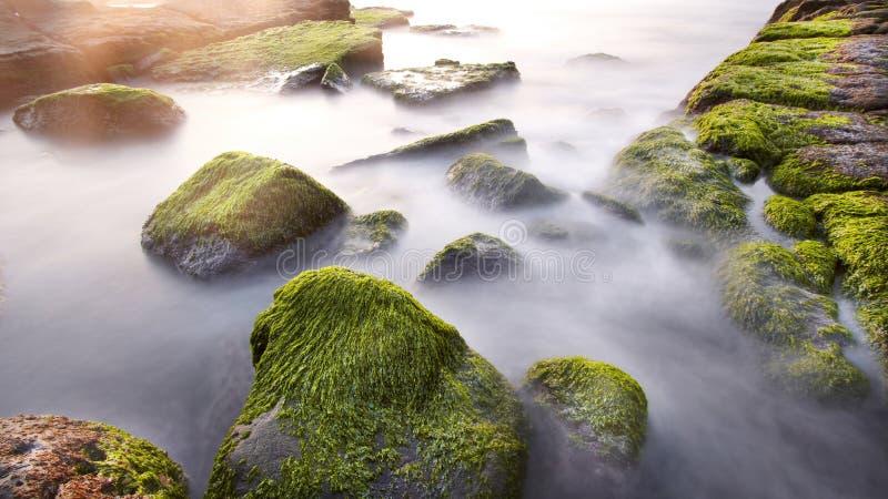 Морская вода пропускает над утесами и мхами в утре стоковое фото