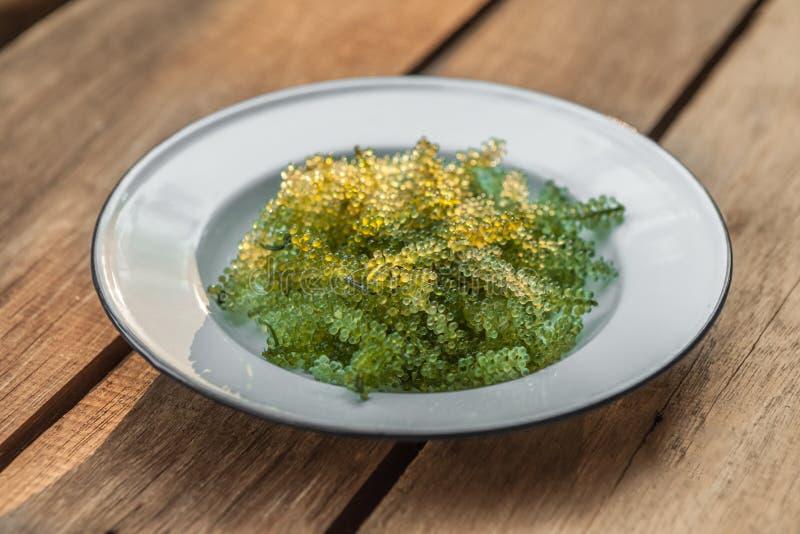 Морская водоросль виноградины стоковые фото