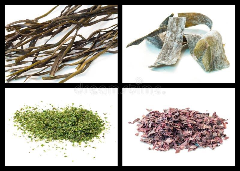 Морская водоросль стоковые фото