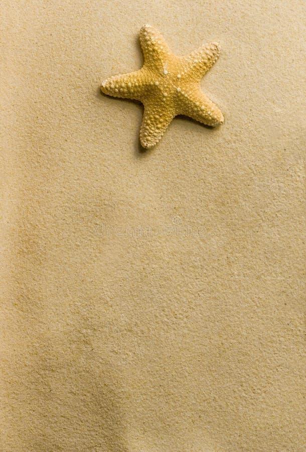 Морская звезда на пляже стоковое изображение rf